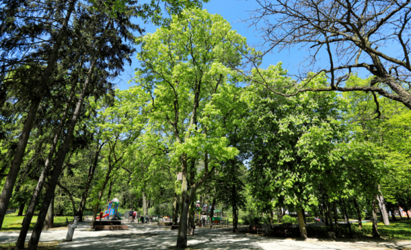Zieleń w Parku Miejskim