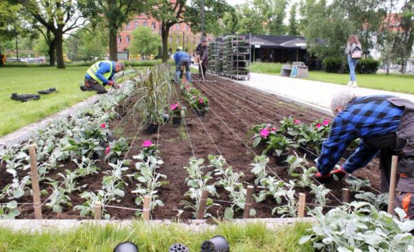 Na zdjęciu przygotowany teren na nasadzanie kwiatów- są zaznaczone sznurkiem grządki, obok ustawione sadzonki