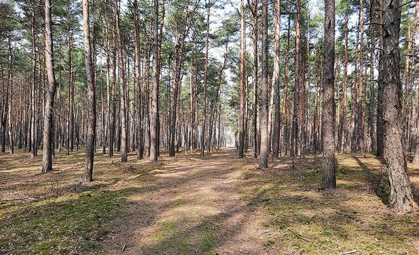 zdjęcie leśnej drogi