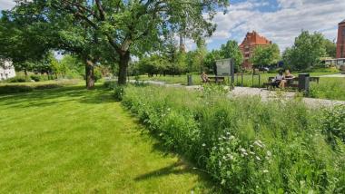 Na zdjęciu widac fragment skoszonego trawnika obok pas zieleni wysoki, łąka kwietna