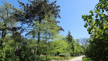 drzewa w Parku Miejskim na Bydgoskim Przedmieściu