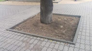 Na zdjęciu otoczenie drzewa po usunięciu chodnika